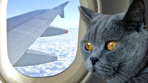 Cu animalul de companie in avion. Afla cum il poti lua cu tine