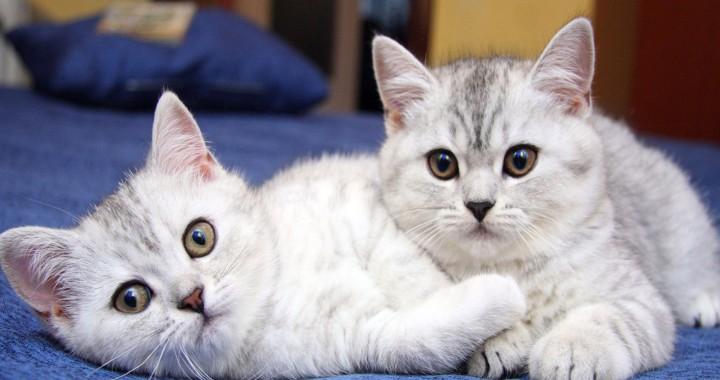 doi pisoi pisici