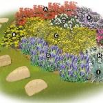 Cum sa faci un strat de flori viu colorat